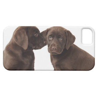 Two chocolate Labrador Retriever Puppies iPhone 5 Covers