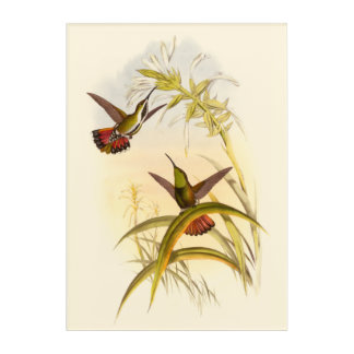 Two Colorful Hummingbirds Aiming for Same Flower Acrylic Wall Art