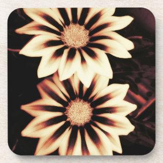 Two Cream Gazania Flowers Coaster