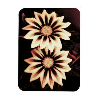Two Cream Gazanias Magnet