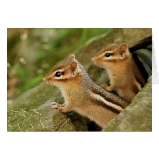 Two Cute Baby Chipmunks Greeting Cards