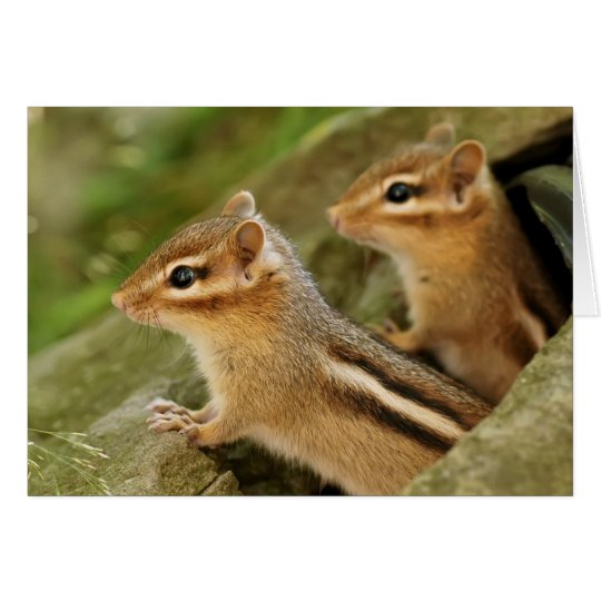 Two Cute Baby Chipmunks Card