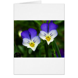 Two cute blue violets card