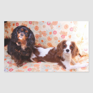 Two Cute Cavalier King Charles Spaniels Sticker