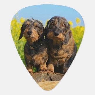 Two Cute Dachshund Dogs Dackel Photo Plectrum