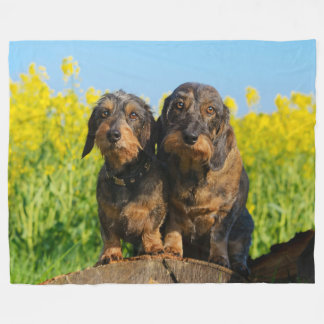 Two Cute Dachshund Dogs Dackel Portrait Photo soft Fleece Blanket