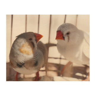 Two Cute Finch Birds behind Bars Wood Print
