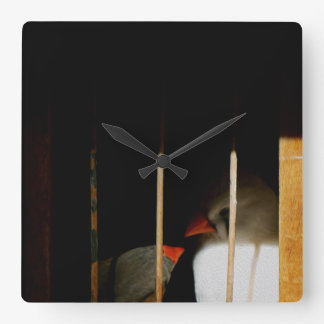 Two Cute Finch Birds in Cage Square Wall Clock