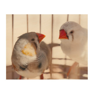 Two Cute Finch Birds in Cage Wood Wall Art