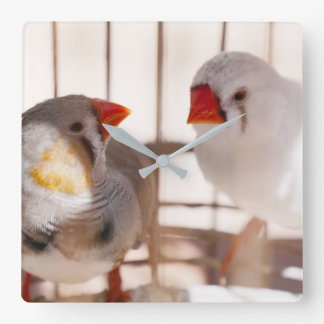 Two Cute Finches in Cage Square Wall Clock