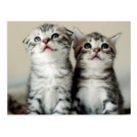 Two Cute Kittens On Bed Postcard