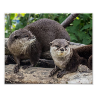 Two Cute Otters | Otter Poster