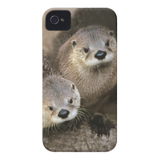 Two Cute River Otters (Lontra canadensis) iPhone 4 Case-Mate Cases