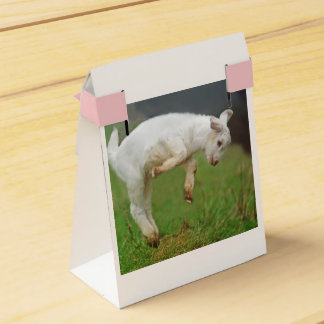 Two Cute White Baby Goats Favour Box