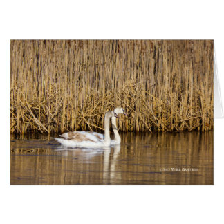 Two Cygnets Late Autumn Card