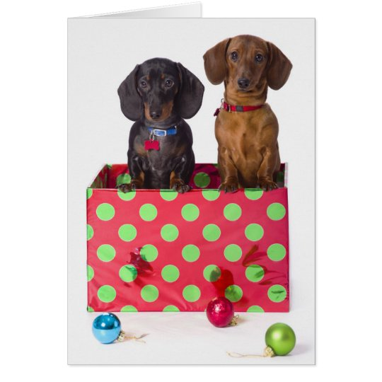 Two Dachshund Puppies Card