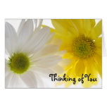 Two Daisies Thinking of You Card