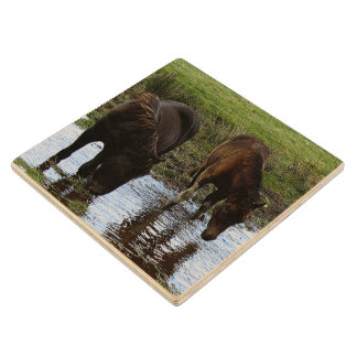 Two Dartmoor Ponies Drinking At Watering Hole Maple Wood Coaster