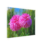 """""""TWO DEEP PINK COLORED DAHLIAS"""" WRAPPED CANVAS PRI GALLERY WRAP CANVAS"""