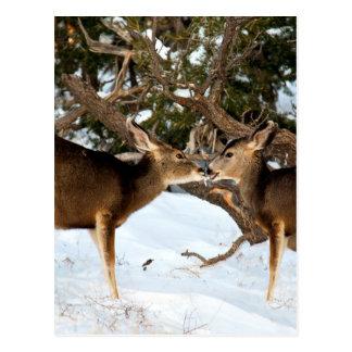 Two Deer Kissing Postcard