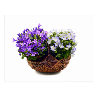 two different bellflowers in a basket postcard