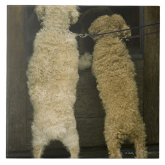 Two dogs looking in door window, rear view tile