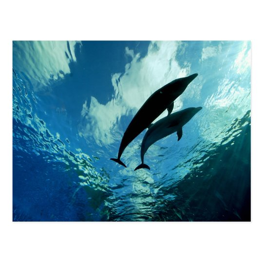 Two Dolphins Journey Through Life Together Postcard