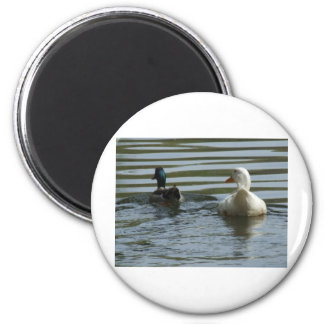 Two Ducks Swimming 6 Cm Round Magnet
