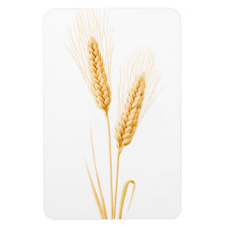 Two ears of wheat magnet