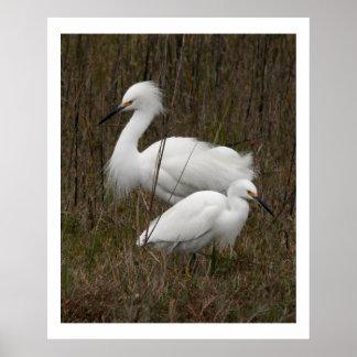 Two Egrets Print