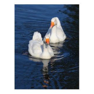 Two Emden Geese II Postcard