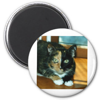 Two Faced Cat 6 Cm Round Magnet