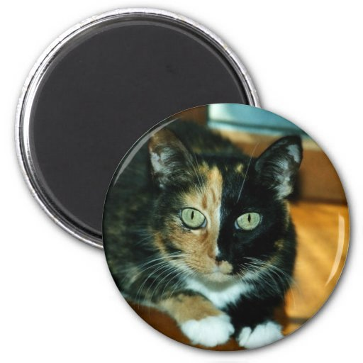 Two Faced Cat Fridge Magnets