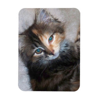 Two faced cat rectangular photo magnet