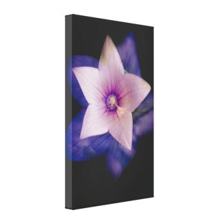 Two flowers in one canvas print