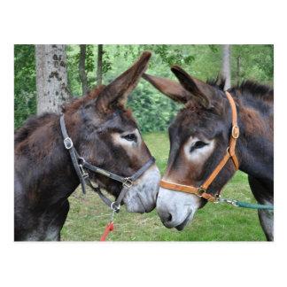 Two friendly donkeys postcard