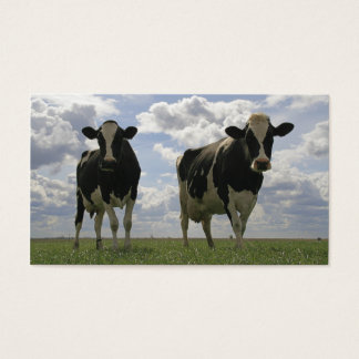 Two Friesian cows bookmark