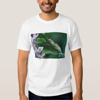 Two Frogs on Branch. Credit as: Nancy T Shirt