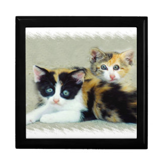 Two Funny Faced Kitties Large Square Gift Box
