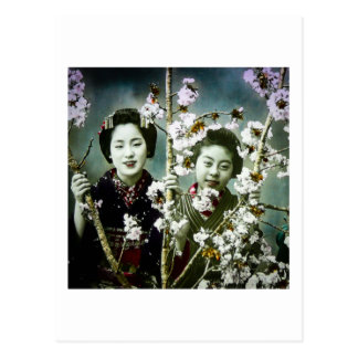 Two Geisha Vintage Japan in Blossoms Japanese Postcard