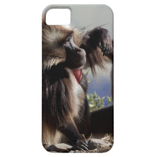Two gelada baboons (Theropithecus gelada) Barely There iPhone 5 Case