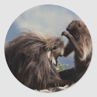 Two gelada baboons (Theropithecus gelada) Classic Round Sticker