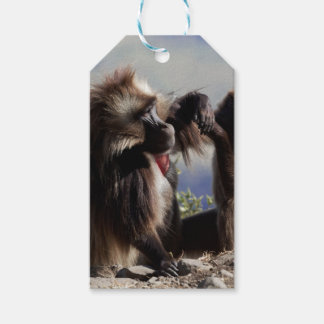 Two gelada baboons (Theropithecus gelada) Gift Tags