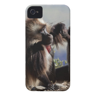 Two gelada baboons (Theropithecus gelada) iPhone 4 Cover