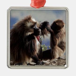 Two gelada baboons (Theropithecus gelada) Metal Ornament