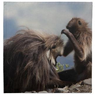 Two gelada baboons (Theropithecus gelada) Napkin