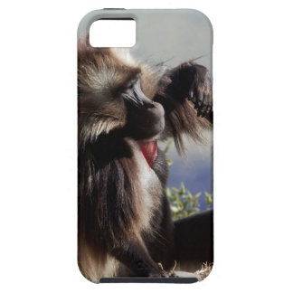 Two gelada baboons (Theropithecus gelada) Tough iPhone 5 Case