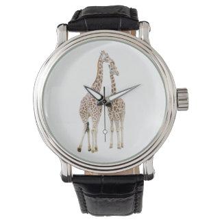 Two Giraffes Watch