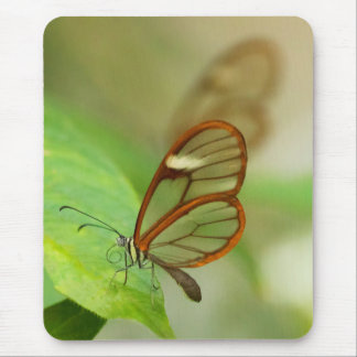 Two Glass winged butterflies Mouse Pad