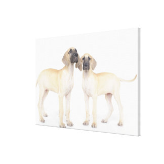 Two Great Danes Stretched Canvas Print
